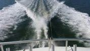 """Buy a yacht Trust Me - BERTRAM 46' 6"""""""