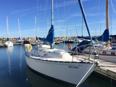 Купить яхту Looney Tunes в Atlantic Yacht and Ship